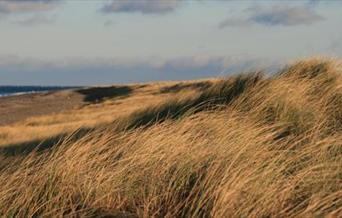 Sade dunes and marram grass at the Ayres